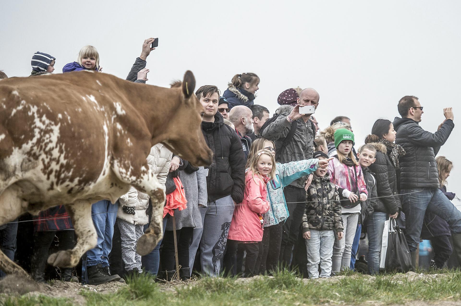 Read more about the article Børnefamilierne er økologiens lokomotiv