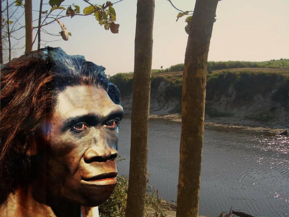 Read more about the article »Utrolig vigtigt studie«: Fund afslører yngste livstegn fra Homo erectus