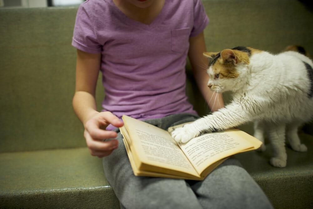 Read more about the article Børn klarer sig bedre i skolen når de læser i fritiden