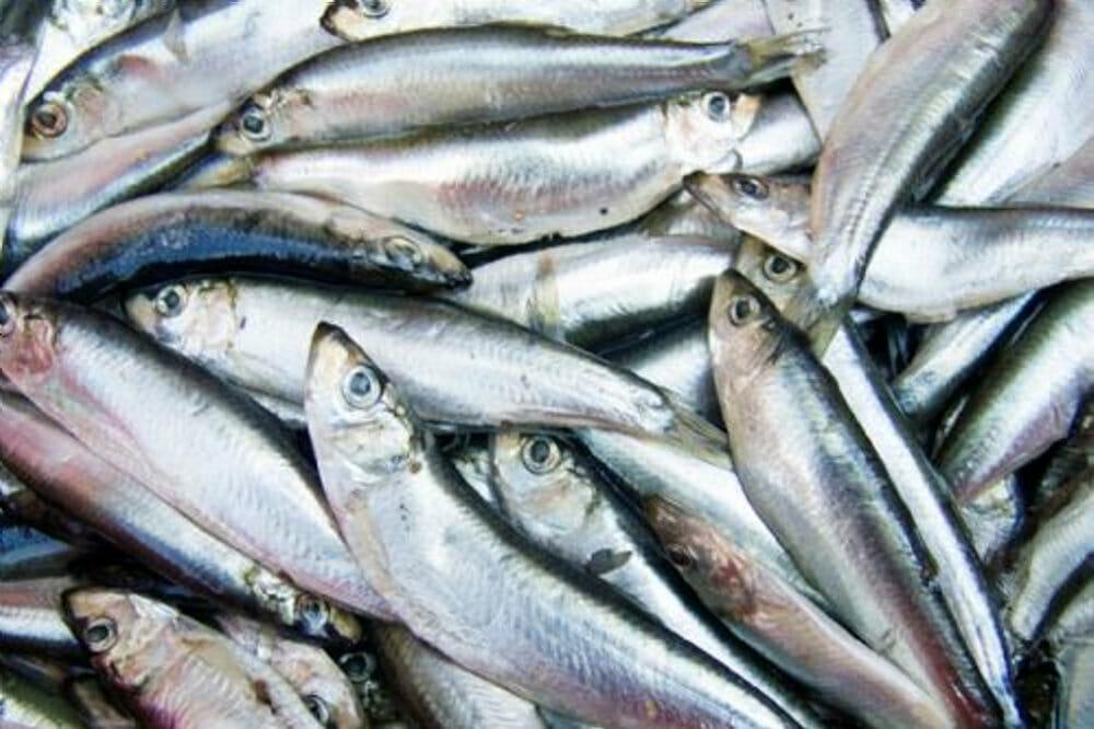 Read more about the article Vælg din fisk med bæredygtig samvittighed