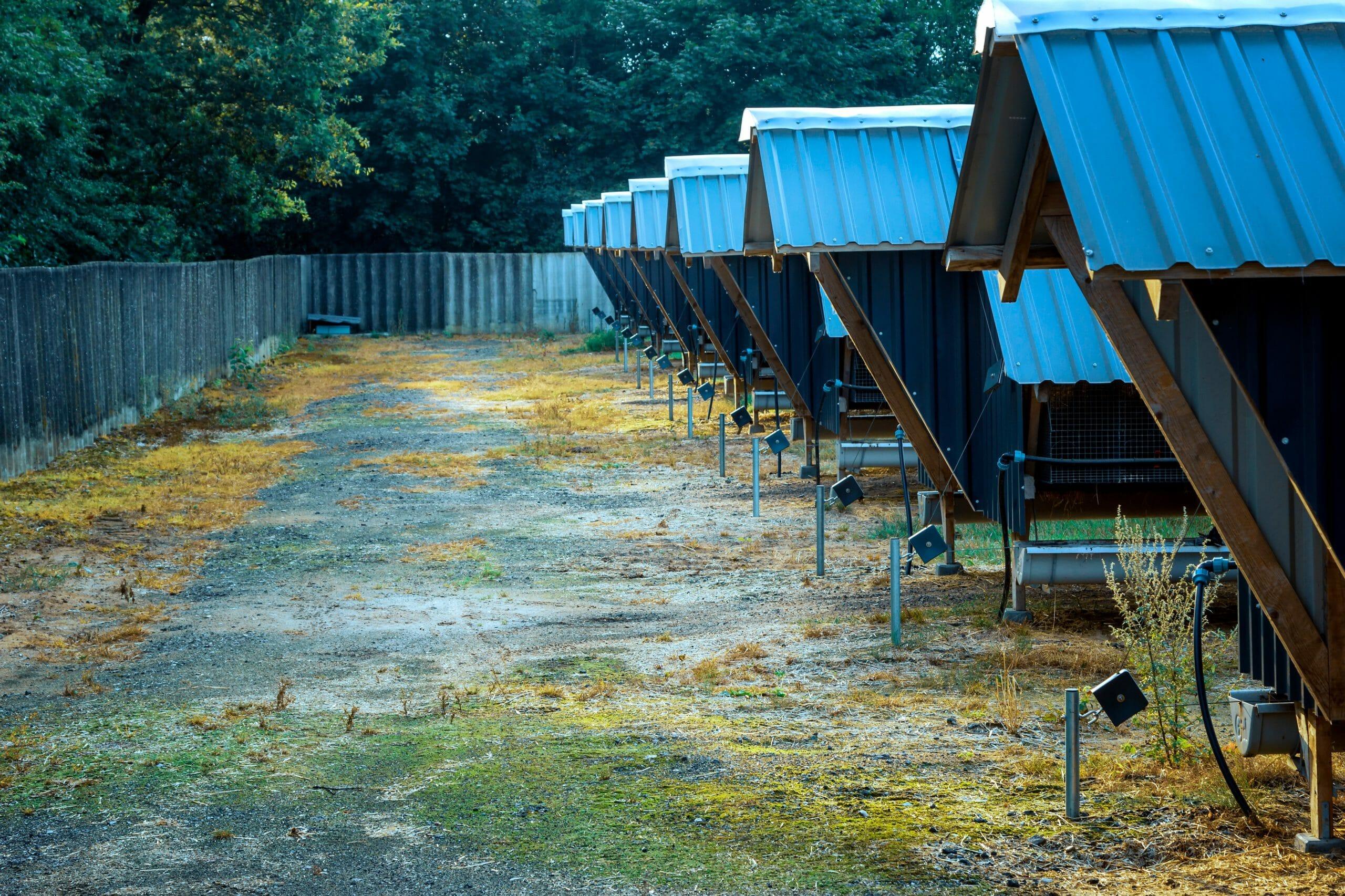 OVERBLIK: Sagen om aflivning af alle mink i Danmark