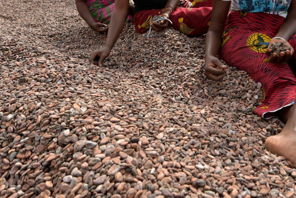Otte unge maliere anklager chokoladegiganter for børneslaveri