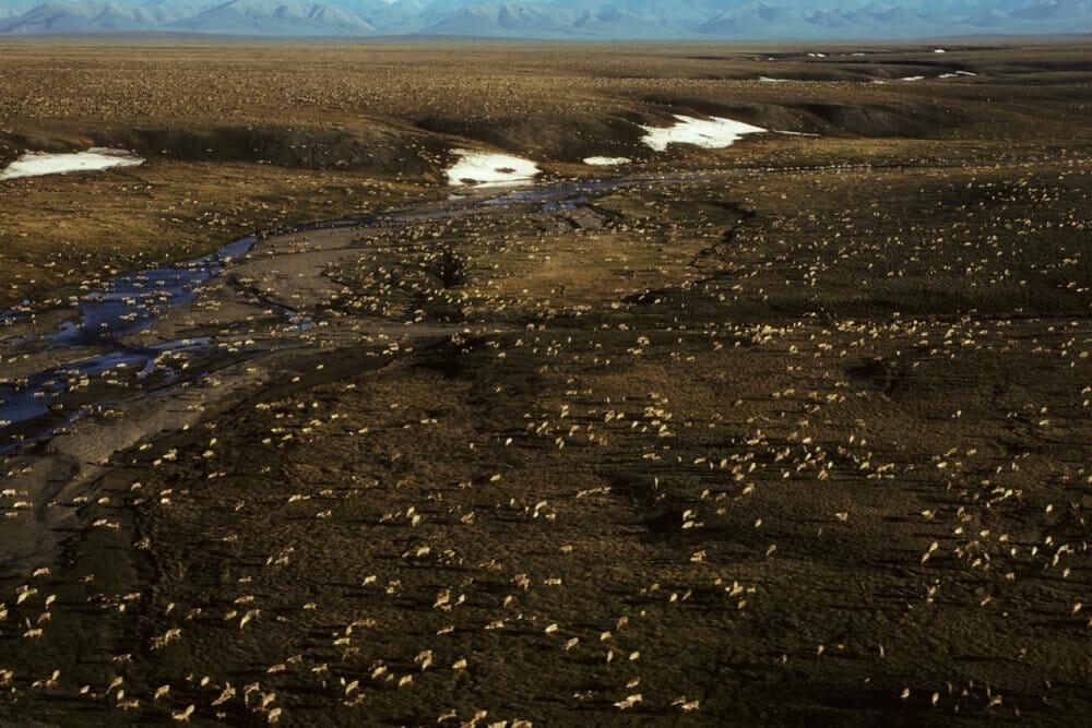 Biden bremser olie- og gasaftaler i naturreservat i Alaska