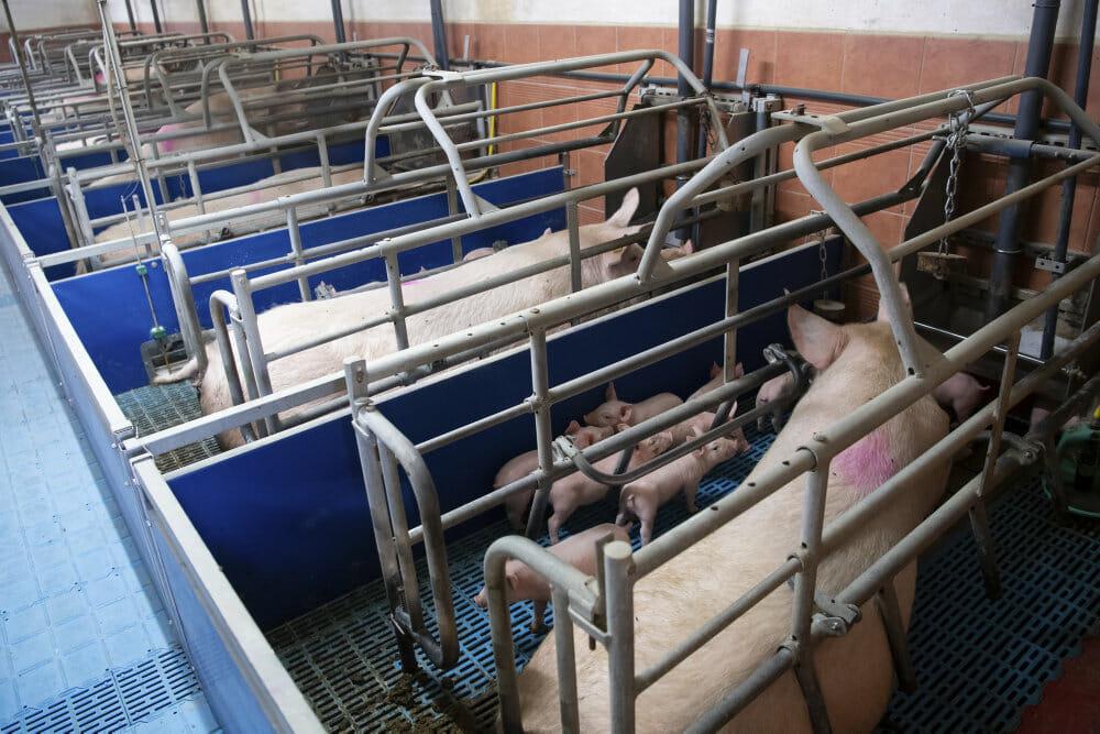EU-Parlament stemmer for at afskaffe tremmedyr og bure