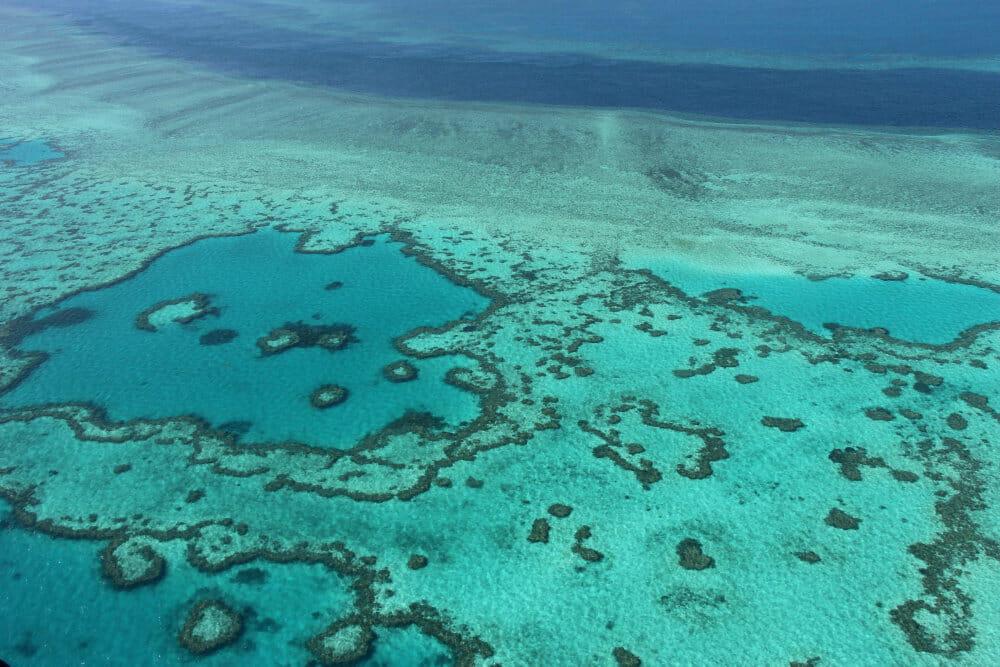 Read more about the article FN: Great Barrier Reef bør på liste over truet verdensarv